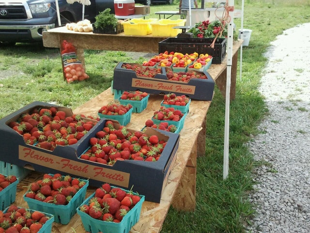 farmar_strawberries